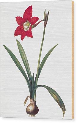 Botany: Lily Wood Print by Granger