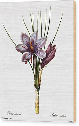 Botany: Saffron Wood Print by Granger