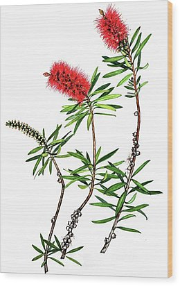 Wood Print featuring the painting Bottle Brush by Heidi Kriel