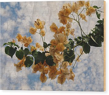 Bougainvillea Bloom Wood Print by Rose  Hill