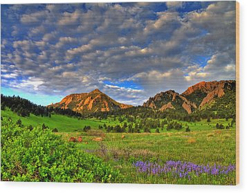 Boulder Spring Wildflowers Wood Print by Scott Mahon