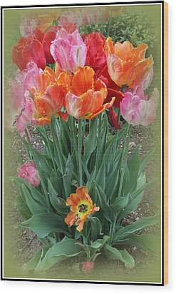Bouquet Of Colorful Tulips Wood Print by Dora Sofia Caputo Photographic Art and Design