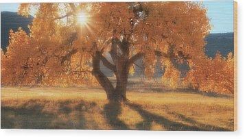 Boxelder's Autumn Tree Wood Print