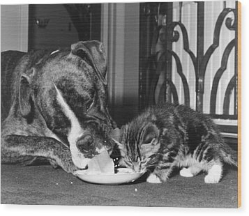 Boxer And Kitten Wood Print by Evening Standard
