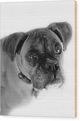 Boxer Dog Wood Print by Marilyn Hunt
