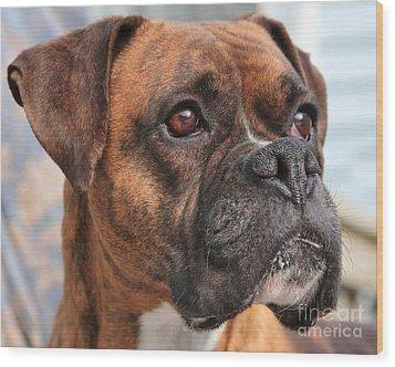 Boxer Portrait Wood Print by Debbie Stahre