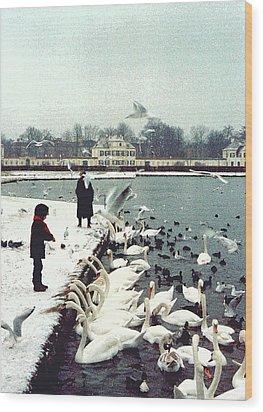 Boy Feeding Swans- Germany Wood Print by Nancy Mueller
