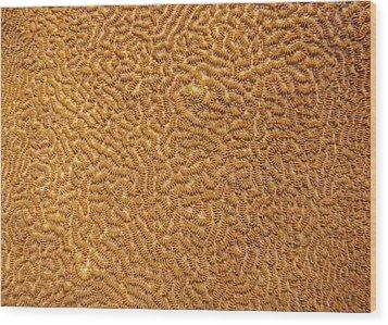 Brain Coral 47 Wood Print