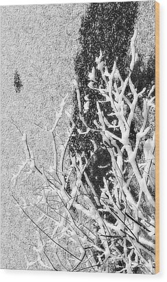 Branch In Lake Ice With Snow Black And White  Wood Print by Randy Steele