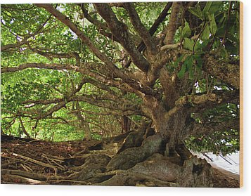 Branches And Roots Wood Print by James Eddy
