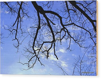 Branches Wood Print by Lois Lepisto