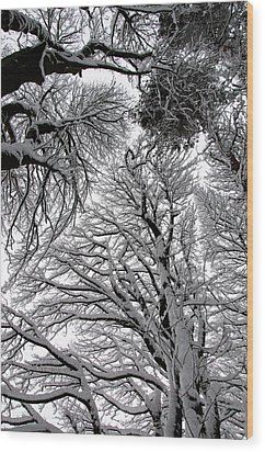 Branches With Snow Wood Print by Mark Denham