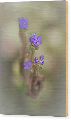 Wood Print featuring the photograph Branching Phacelia by Alexander Kunz