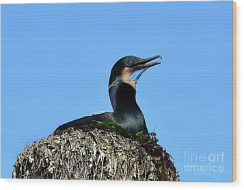 Wood Print featuring the photograph Brandt's Cormorant Sitting On Her Nest by Susan Wiedmann