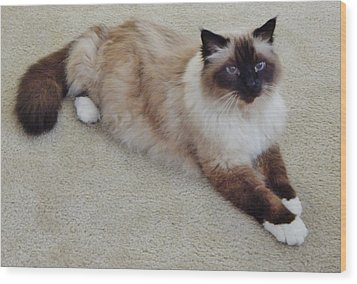 Brassy Our Birman Wood Print