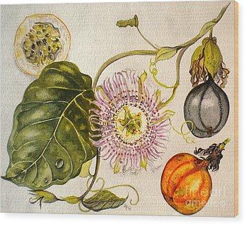 Brazilian Passion Fruit             Passiflora Ligularis Seme Wood Print by Sandra Phryce-Jones