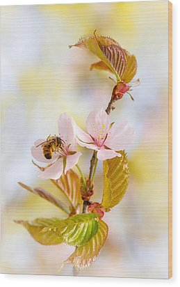 Wood Print featuring the photograph Breakfast At Sakura by Alexander Senin