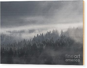 Wood Print featuring the photograph Breath Of The Forest by Yuri Santin