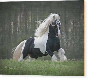 Breathtaking Stallion Wood Print by Terry Kirkland Cook