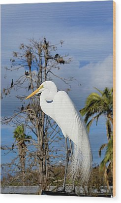 Breezy Egret Wood Print by Josy Cue