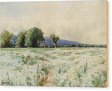 Bricher Alfred Thompson The Daisy Field Wood Print
