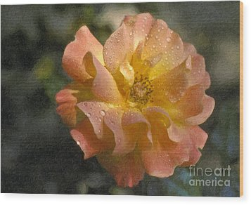 Wood Print featuring the photograph Bridal Pink Yellow Hybrid Tea Rose Genus Rosa by David Zanzinger