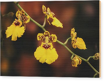 Bright And Beautiful Orchids Wood Print by Tom Mc Nemar