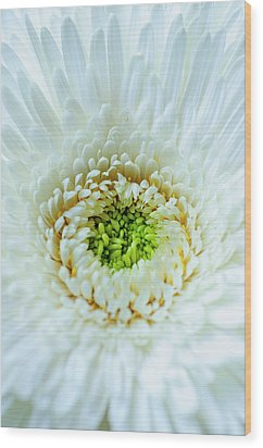 Wood Print featuring the photograph Bright As A Lime by Christi Kraft