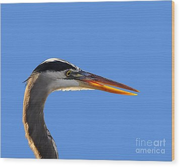 Wood Print featuring the photograph Bright Beak Blue .png by Al Powell Photography USA