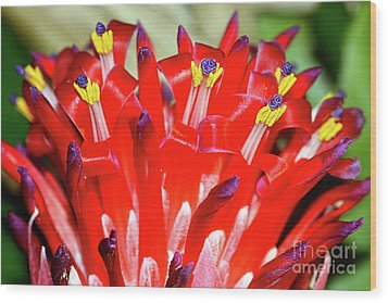 Wood Print featuring the photograph Bright Blooming Bromeliad By Kaye Menner by Kaye Menner