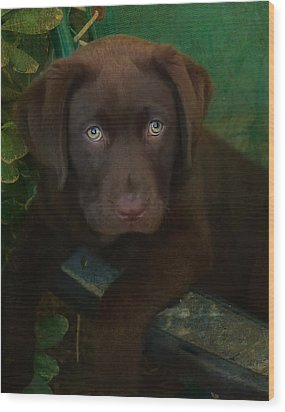 Bright Eyes Wood Print by Larry Marshall