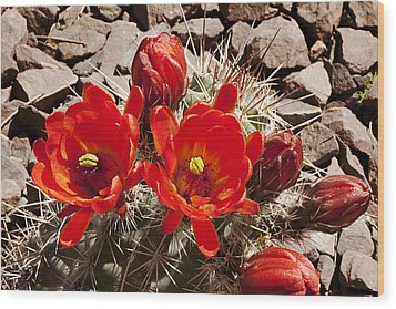 Wood Print featuring the photograph Bright Orange Cactus Blossoms by Phyllis Denton