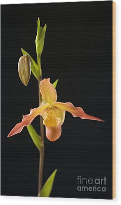 Bright Orchid Wood Print by Ron Dahlquist - Printscapes