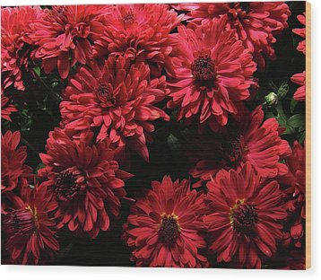 Bright Red Mums Wood Print by Scott Hovind