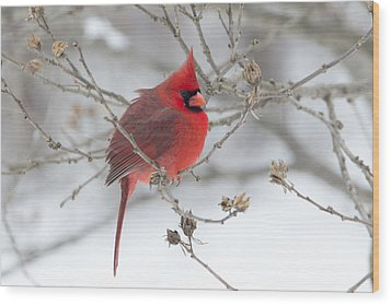 Bright Splash Of Red On A Snowy Day Wood Print