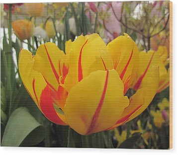 Bright Tulip Wood Print by MTBobbins Photography
