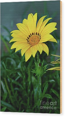 Wood Print featuring the photograph Bright Yellow Gazania By Kaye Menner by Kaye Menner