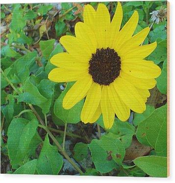 Bright Yellow Joy Wood Print by Cheryl Waugh Whitney