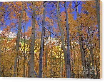 Brilliance Of Fall Wood Print by Barbara Schultheis