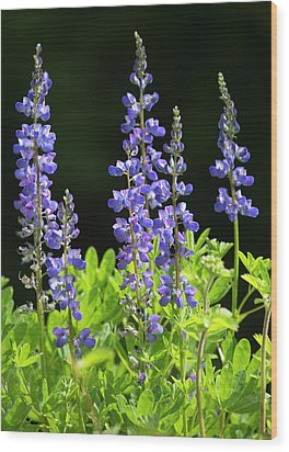 Wood Print featuring the photograph Brilliant Lupines by Elvira Butler