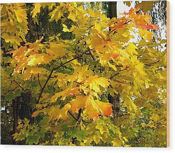 Brilliant Maple Leaves Wood Print by Will Borden