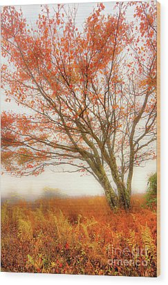 Wood Print featuring the photograph Brilliant Orange Autumn Fall Colors Tree by Dan Carmichael