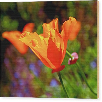 Wood Print featuring the photograph Brilliant Spring Poppies by Rona Black
