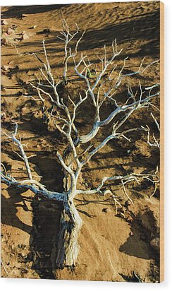 Brins Mesa 07-104 Stripped Bare Wood Print by Scott McAllister