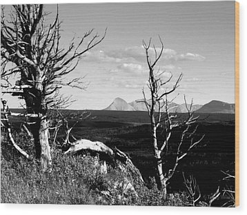 Bristle Cone Pines With Divide Mountain In Black And White Wood Print