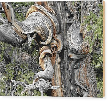 Bristlecone Pine - 'i Am Not Part Of History - History Is Part Of Me' Wood Print by Christine Till