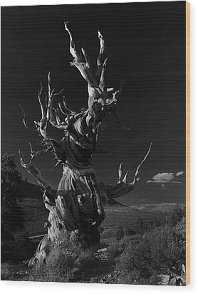 Wood Print featuring the photograph Bristlecone Pine by Art Shimamura