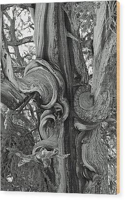 Bristlecone Pine Detail Wood Print by Troy Montemayor