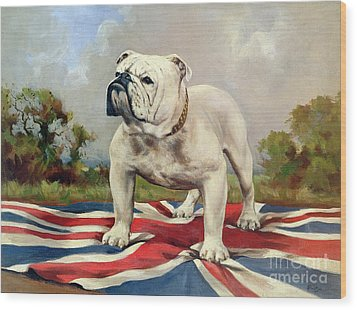 British Bulldog Wood Print by English School