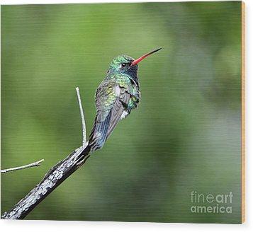 Broad-billed Hummingbird Wood Print
